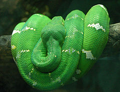 Emerald Tree Boa coloring #17, Download drawings