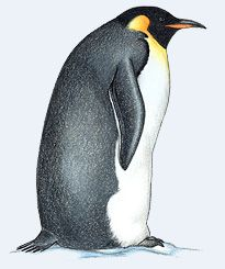 King Emperor Penguins clipart #16, Download drawings