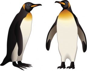 King Emperor Penguins clipart #2, Download drawings