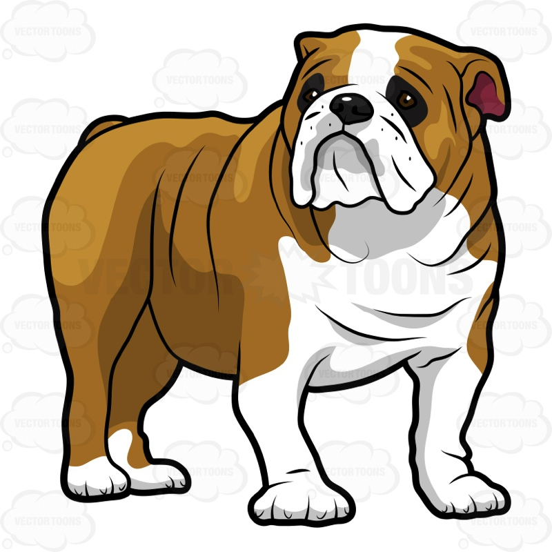 English Bulldog clipart #16, Download drawings