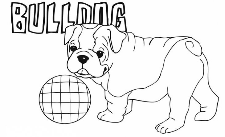 English Bulldog coloring #20, Download drawings