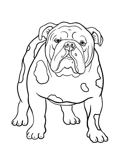English Bulldog coloring #19, Download drawings