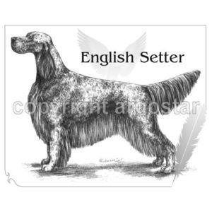 English Setter clipart #10, Download drawings
