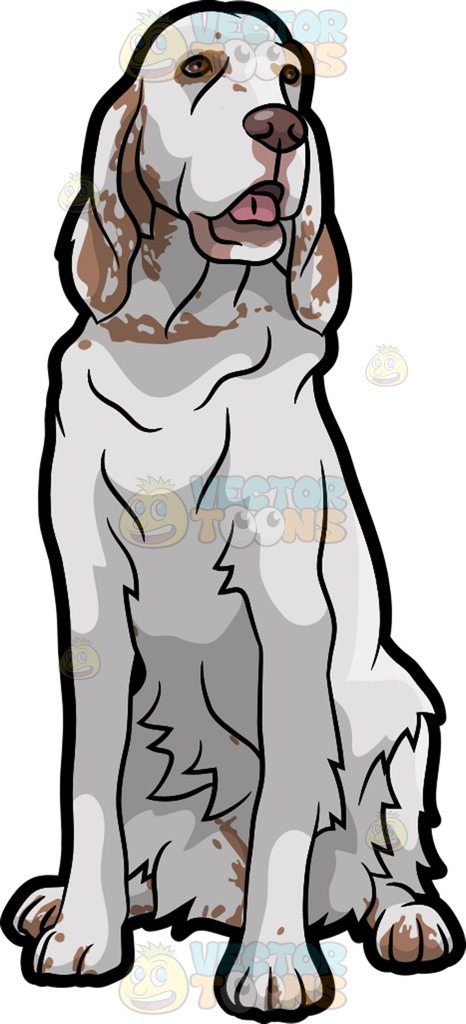 English Setter clipart #8, Download drawings