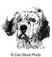 English Setter clipart #14, Download drawings