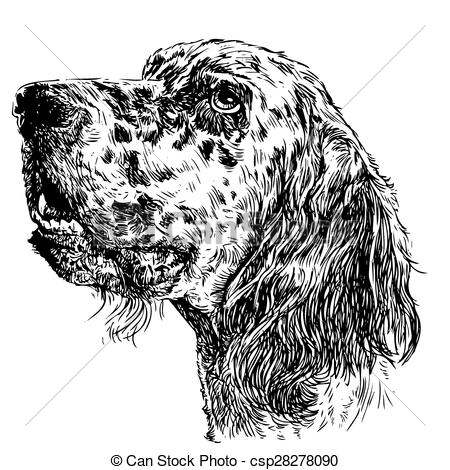 English Setter clipart #5, Download drawings