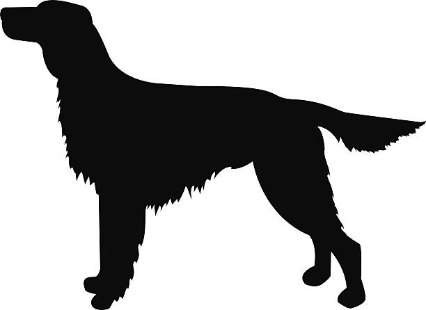 Red Setter clipart #19, Download drawings