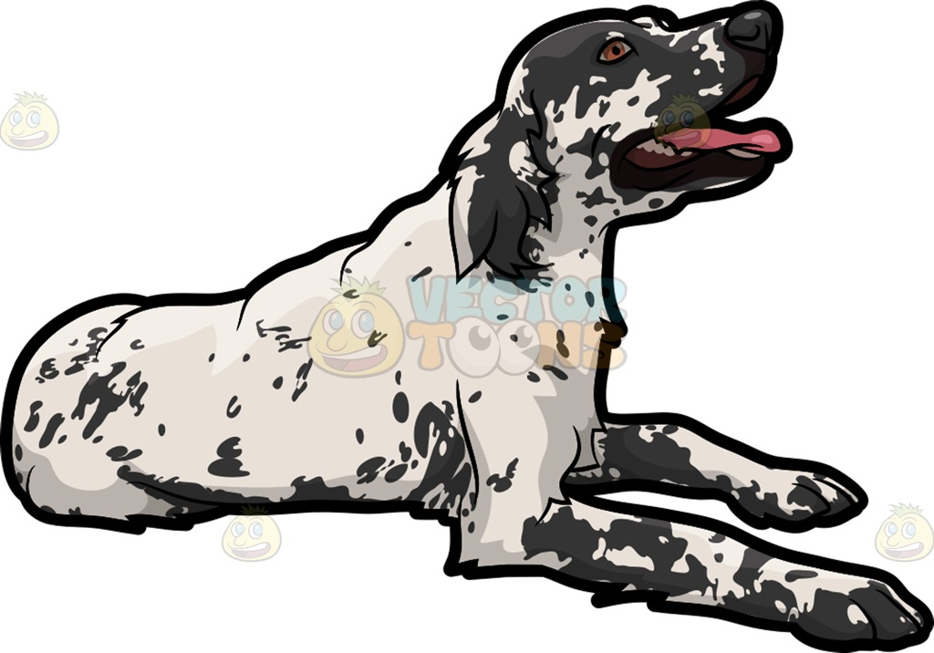 English Setter clipart #12, Download drawings