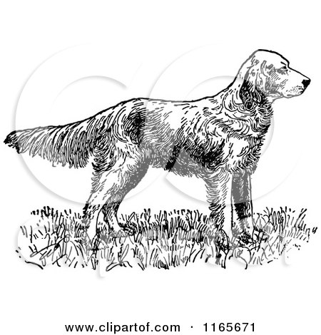 English Setter clipart #4, Download drawings