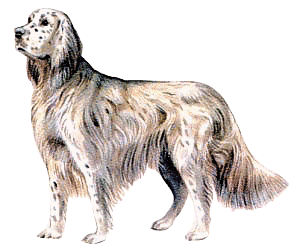 English Setter clipart #7, Download drawings