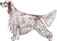 English Setter coloring #8, Download drawings