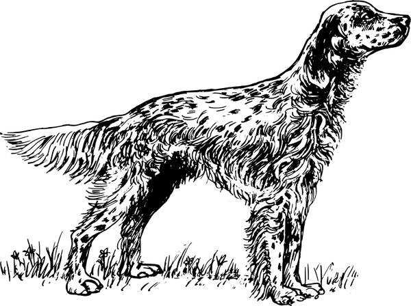 Red Setter svg #19, Download drawings