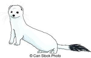 Ermine clipart #11, Download drawings