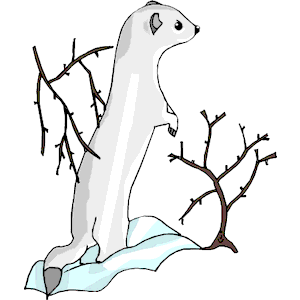 Ermine clipart #3, Download drawings