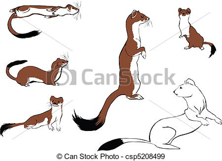 Ermine clipart #12, Download drawings