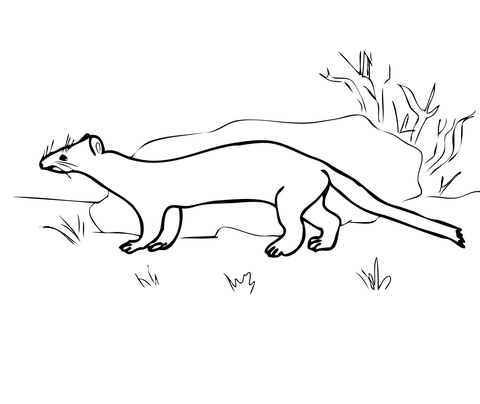 Stoat coloring #18, Download drawings