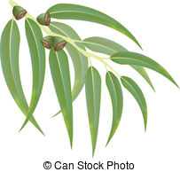 Eucalyptus clipart #15, Download drawings