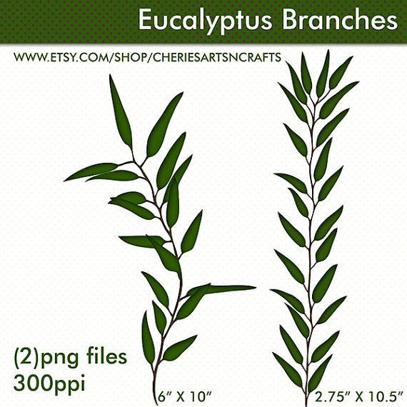 Eucalyptus clipart #5, Download drawings