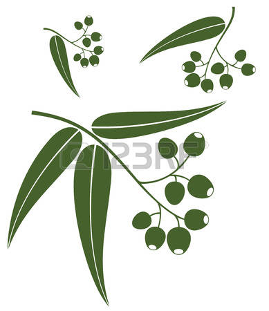 Eucalyptus clipart #19, Download drawings