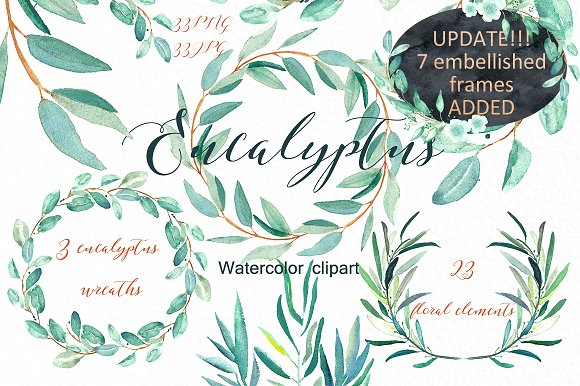 Eucalyptus clipart #17, Download drawings