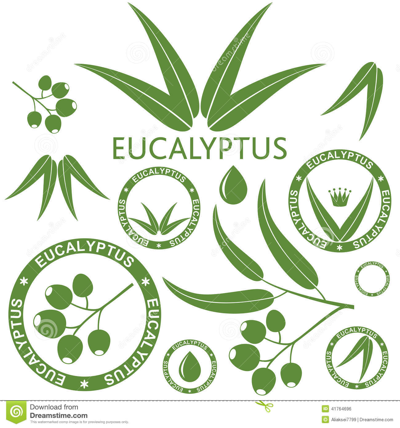 Eucalyptus clipart #14, Download drawings