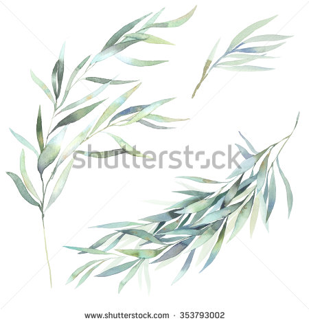 Eucalyptus clipart #11, Download drawings
