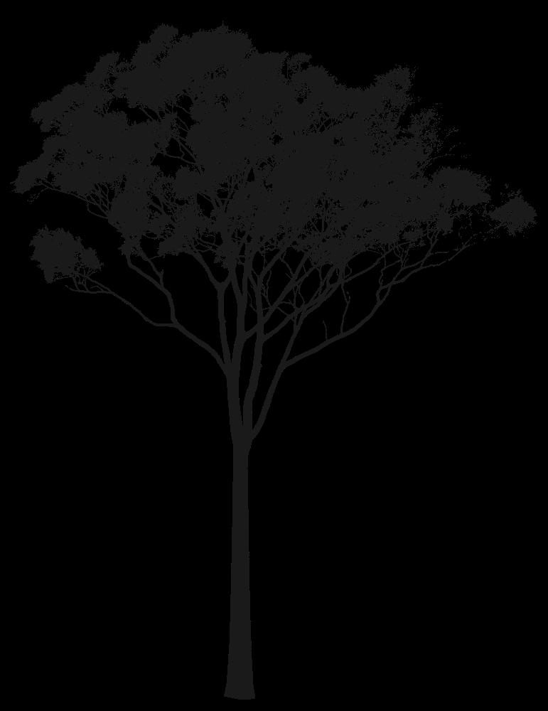 Eucalyptus Gum Tree clipart #10, Download drawings