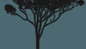 Eucalyptus Gum Tree clipart #1, Download drawings