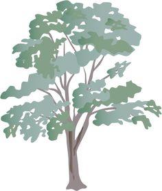 Eucalyptus Gum Tree clipart #11, Download drawings