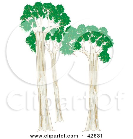Eucalyptus Gum Tree clipart #8, Download drawings