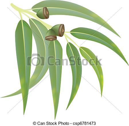 Eucalyptus Gum Tree clipart #7, Download drawings