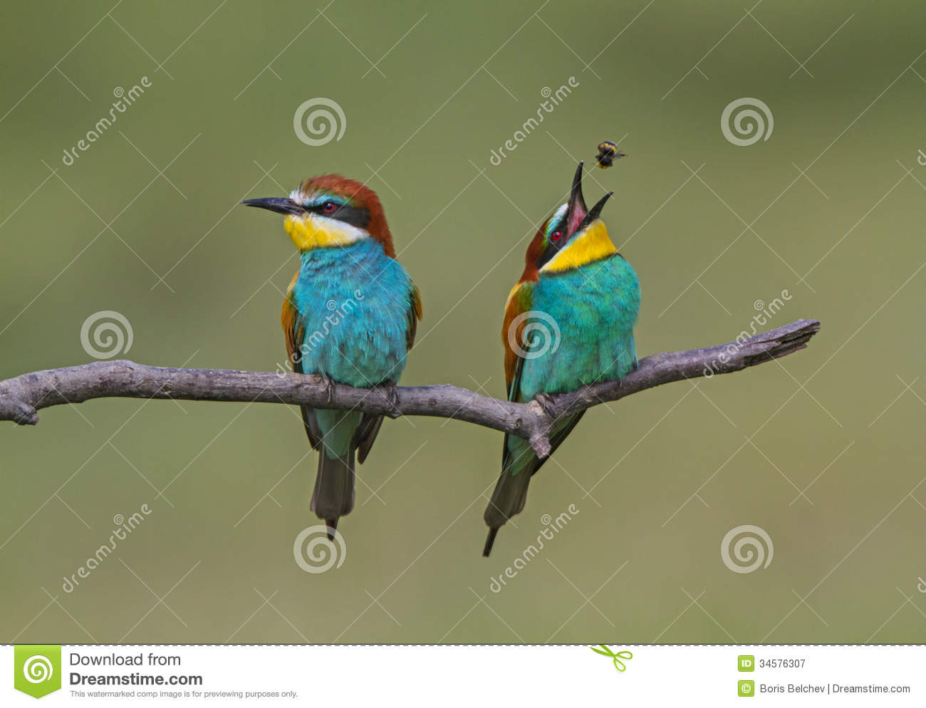 Eurasian Bee-eater clipart #20, Download drawings
