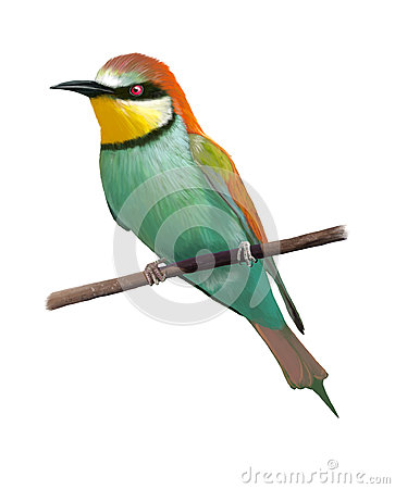 Eurasian Bee-eater clipart #12, Download drawings