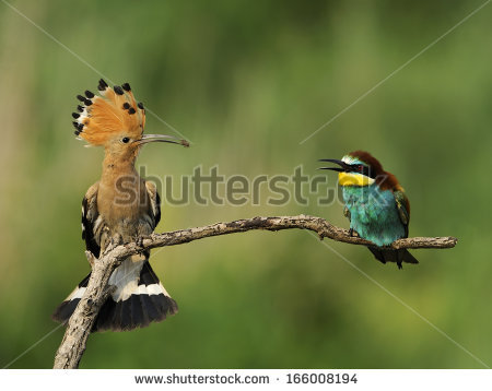 Eurasian Bee-eater clipart #7, Download drawings