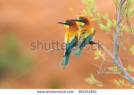Eurasian Bee-eater clipart #5, Download drawings