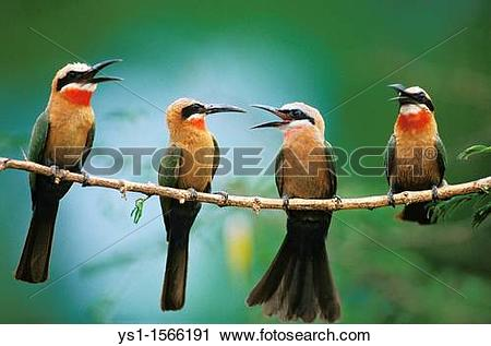 Eurasian Bee-eater clipart #15, Download drawings