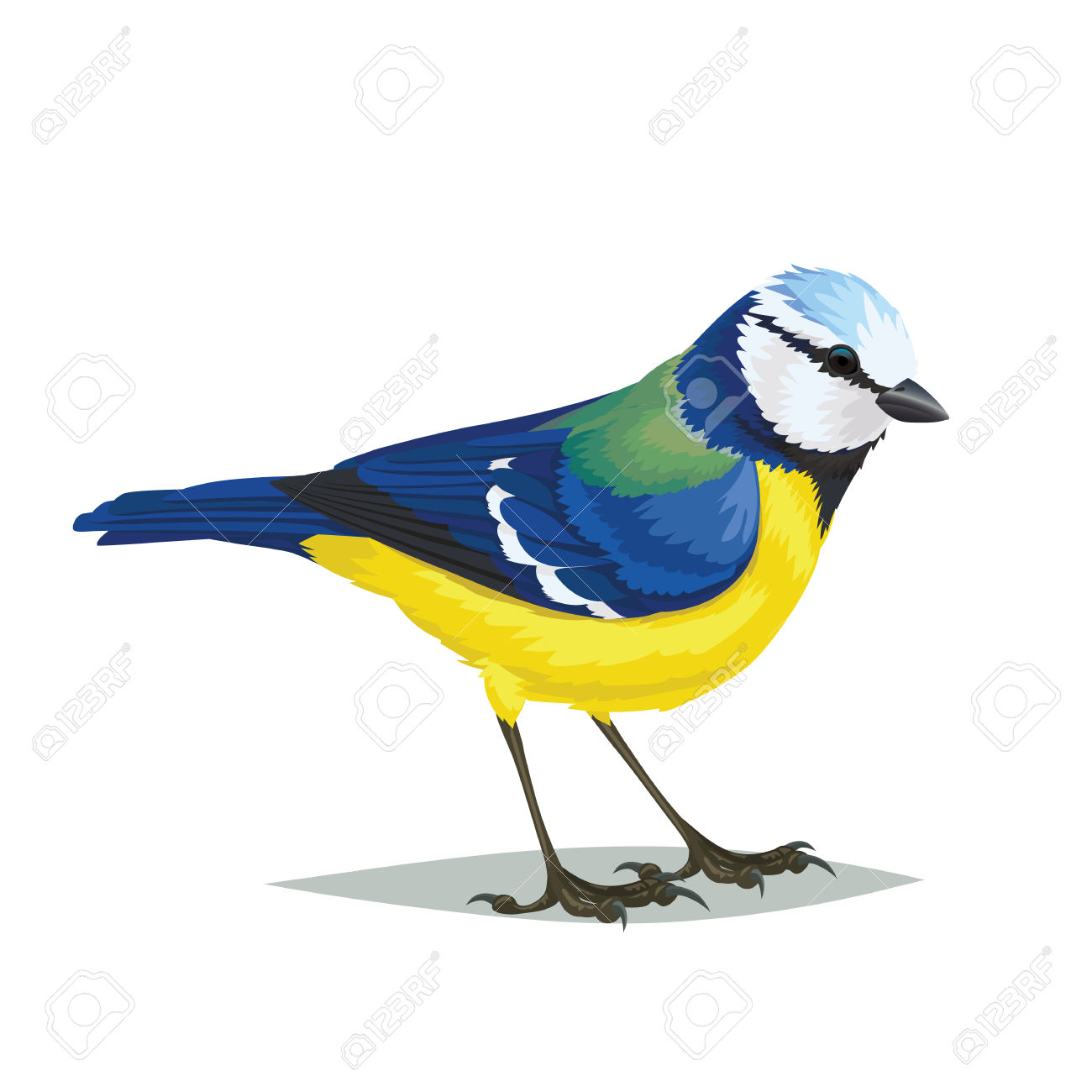 Eurasian Blue Tit clipart #16, Download drawings