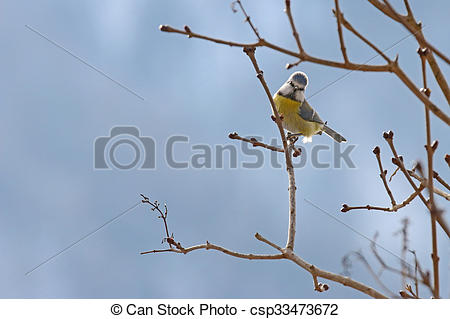 Eurasian Blue Tit clipart #1, Download drawings