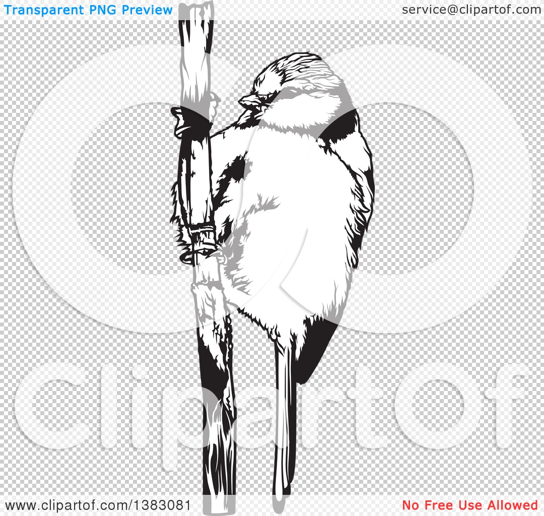 Eurasian Blue Tit clipart #9, Download drawings