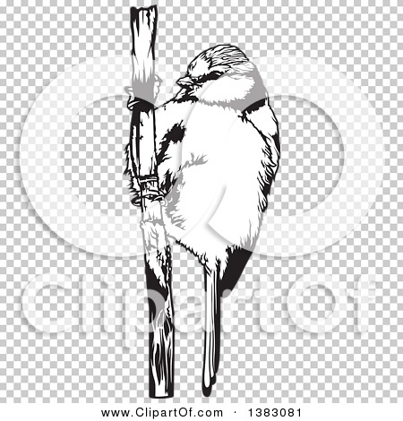Eurasian Blue Tit clipart #15, Download drawings