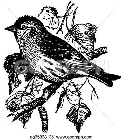 Eurasian Siskin clipart #18, Download drawings