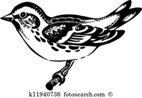Eurasian Siskin clipart #7, Download drawings