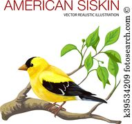 Eurasian Siskin clipart #19, Download drawings