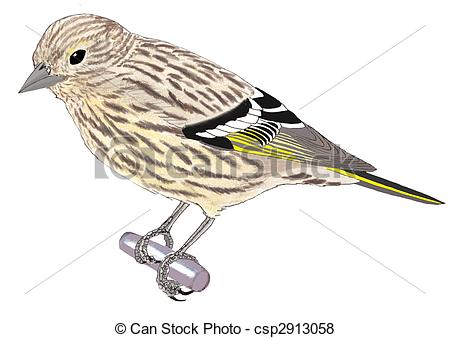 Eurasian Siskin clipart #13, Download drawings
