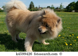 Eurasier clipart #11, Download drawings