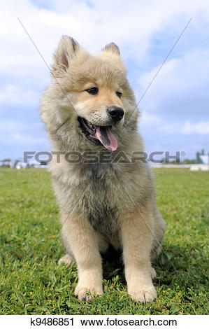 Eurasier clipart #7, Download drawings