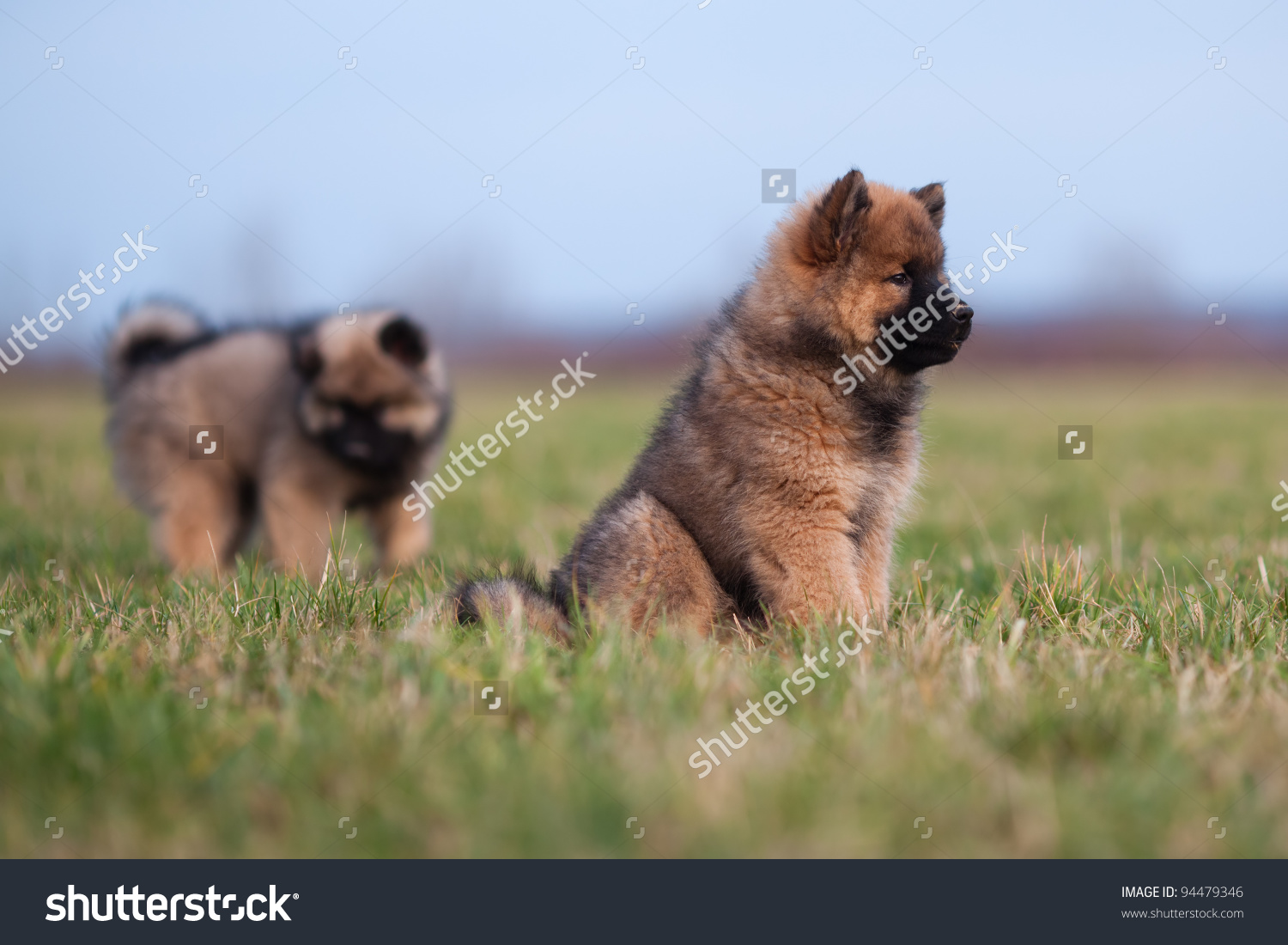Eurasier clipart #5, Download drawings