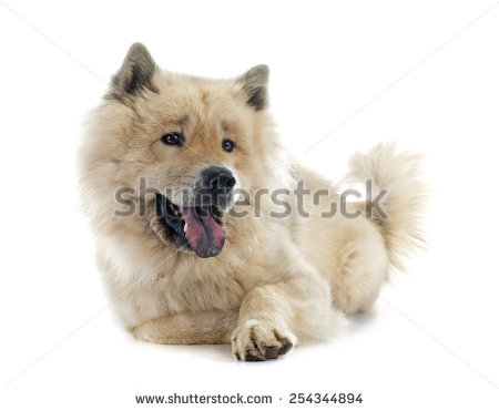 Eurasier clipart #2, Download drawings