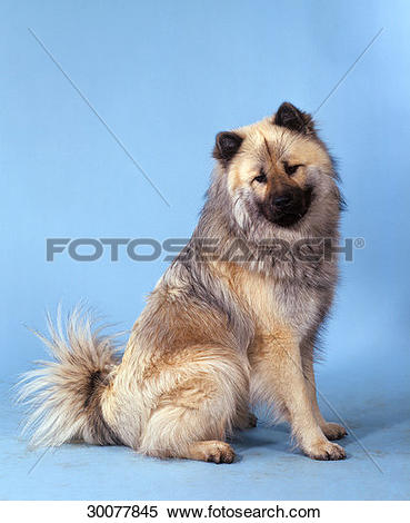 Eurasier clipart #16, Download drawings