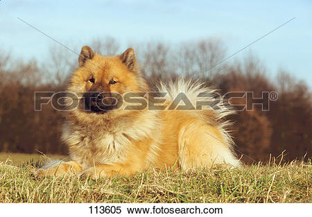 Eurasier clipart #14, Download drawings